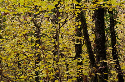 Image of colorful autumn foliage in the forest
