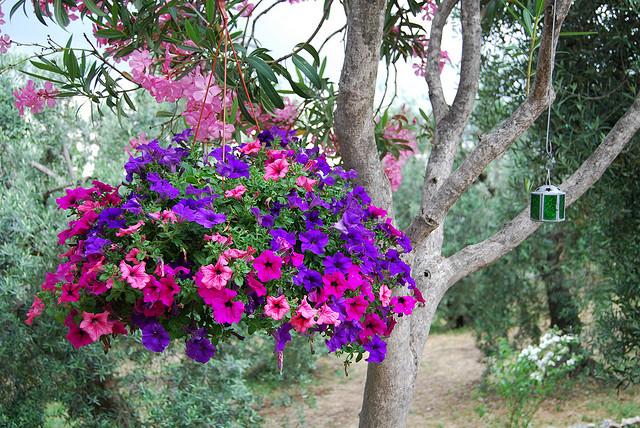 Il giardino sfumato fiori da appendere - Alberello da giardino ...