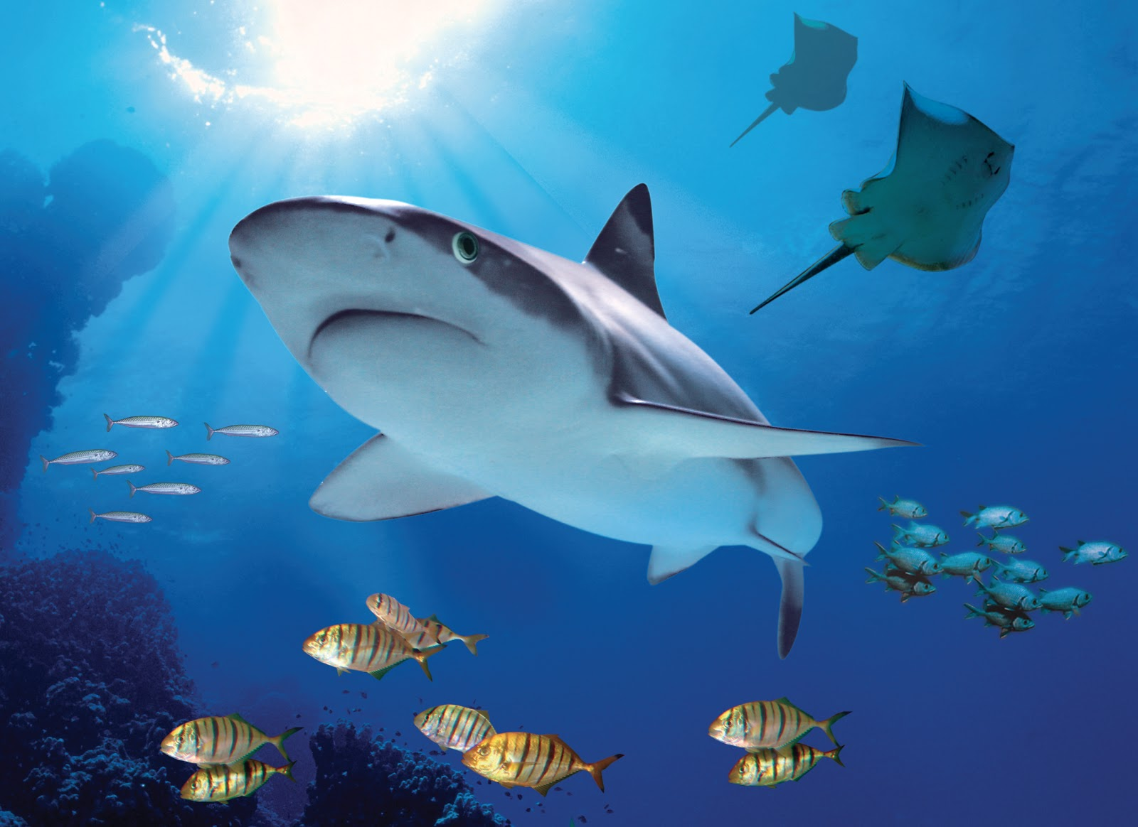 All About Visits London Aquarium