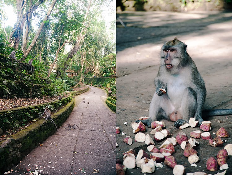 what to do in Ubud Bali