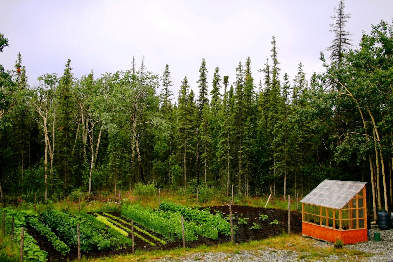 Neil Hannan's rural Alaska homestead.