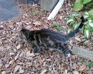 4+cat+pic_crop