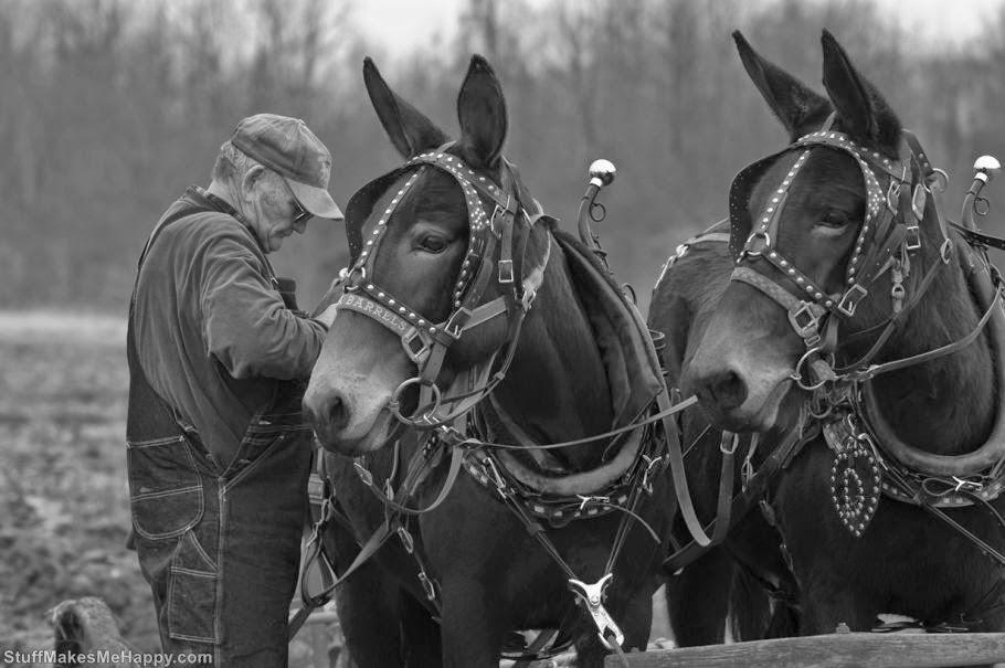 The Donkey or the Mule 2 (Photo by Joe Schneid Louisville, KY)