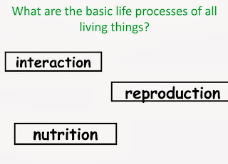https://dl.dropboxusercontent.com/u/45422909/BLOG/What%20are%20the%20basic%20life%20processes%20of%20all%20living%20th.swf