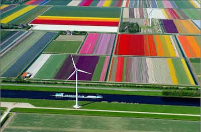 الحقول الشمالية في هولندا