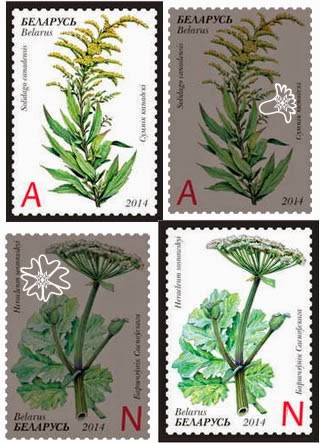Invasive Plants of Belarus