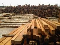 Jenis-Jenis Kayu yang Sering Digunakan Dalam Pembuatan Bangunan