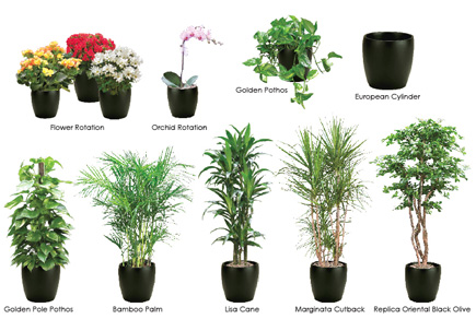 while many plants can benefit from the regulated temperature and light indoors not all interior plants have the same sunlight or temperature requirements - House Plants Decoration Ideas
