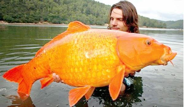 Holaaaaaaaaaaa!!! Goldfish