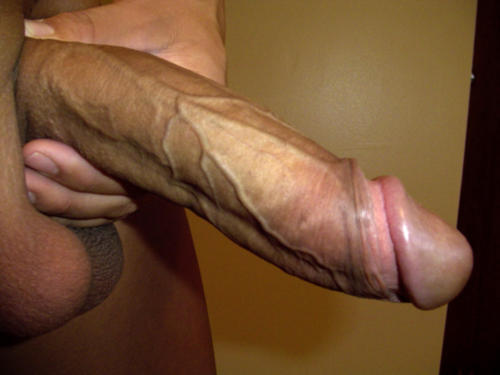 cock World dick big biggest
