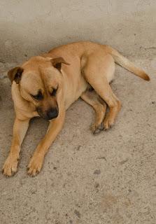 Este perro nos acompañó en el camino a las cascadas de la Chorrera, cerca de Choachí.
