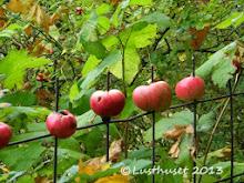 Äppelstaket