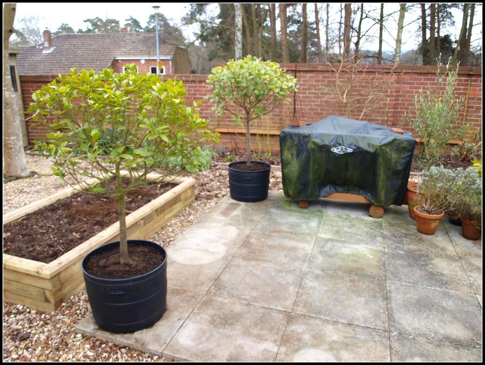 mark u0027s veg plot re potted bay trees a success story