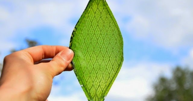 Man Creates The First Ever Leaf That Turns Light and Water Into Oxygen