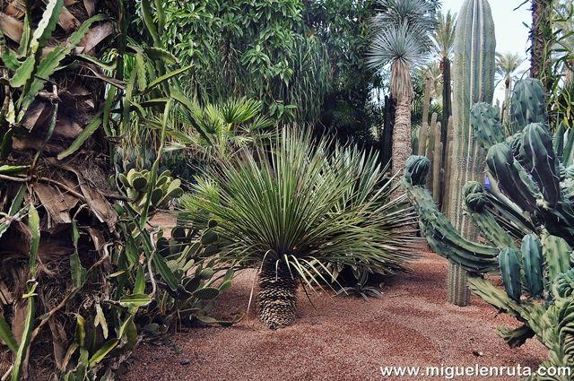 Jardines-Majorelle-plantas