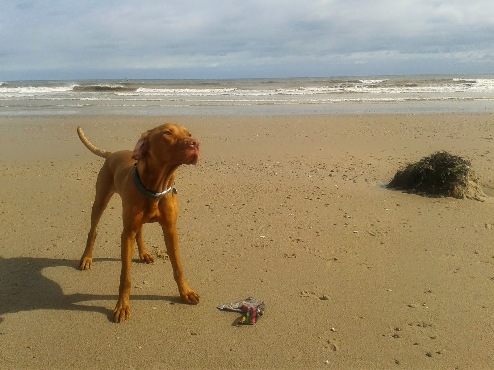 The Adventures of Tussock Vizsla