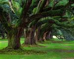 """Vídeo del poema """"Si los árboles"""""""