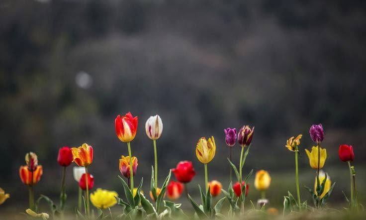 Koleksi Gambar Bunga Untuk Header Blog Dan Facebook