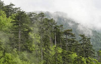 документални филми забравените гори