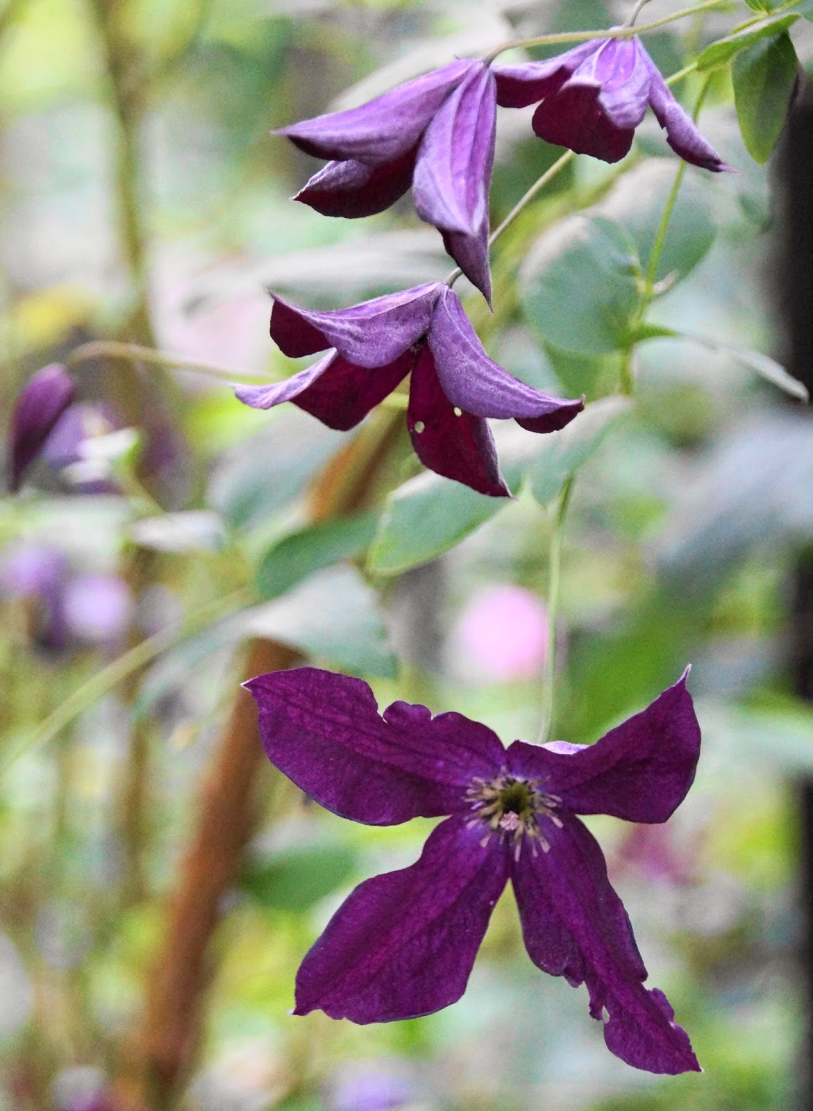 Hage Plants: Juli plante hoste og nyte late dager i hagen. Nyttehage ...