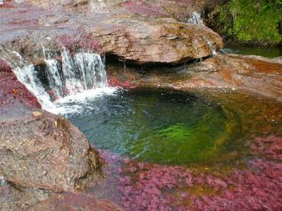 Cano Cristales,Sungai yang Memiliki 5 Warna