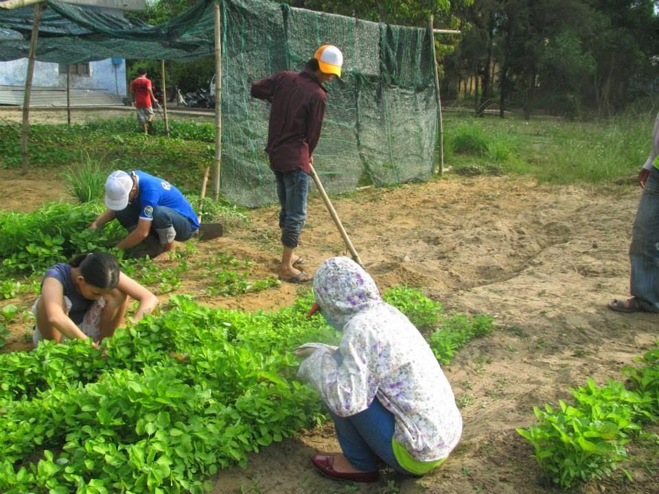 vườn rau bici tại trung tâm hướng nghiệp từ thiện đà nẵng