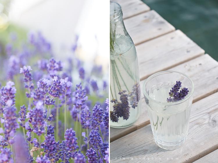 lavendellemonade, lavender lemonade, lavender drink, lavendelsaft, drink lavendel, cordial lavender, lavendel, lavender