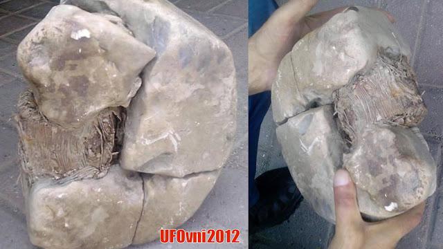 De nouvelles preuves de l'ancien Wen Ming : le photographe a découvert transformateur il y a 20.000