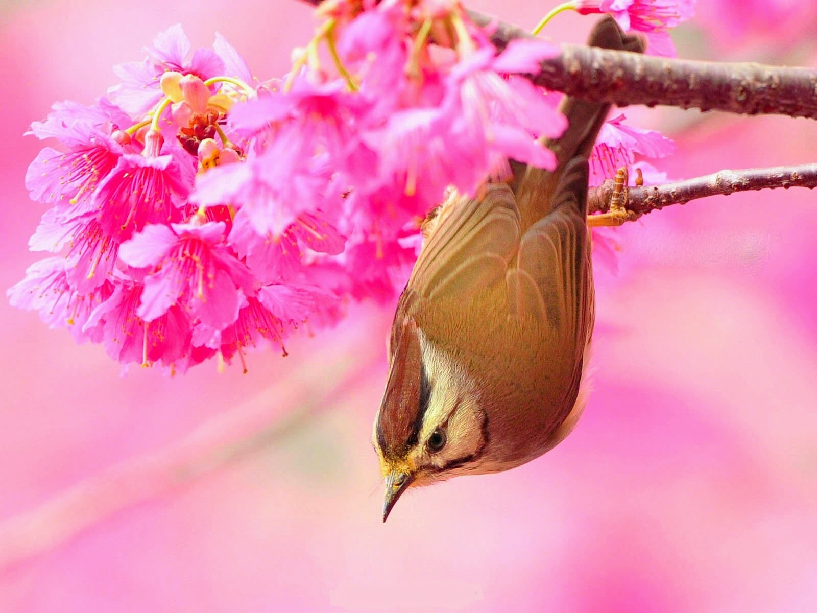 Beautiful Wallpapers In The World Natural Beauty With Bird Wallpaper