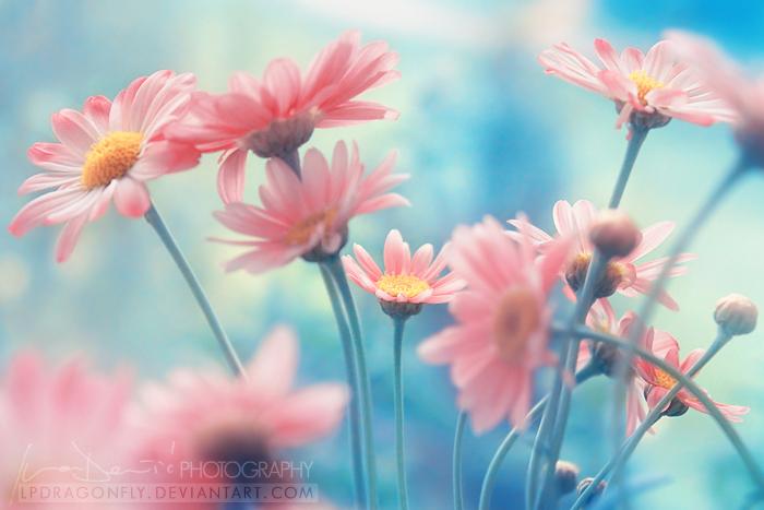 Сине розовый цветок