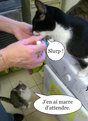 Trois chats et une pâtée.