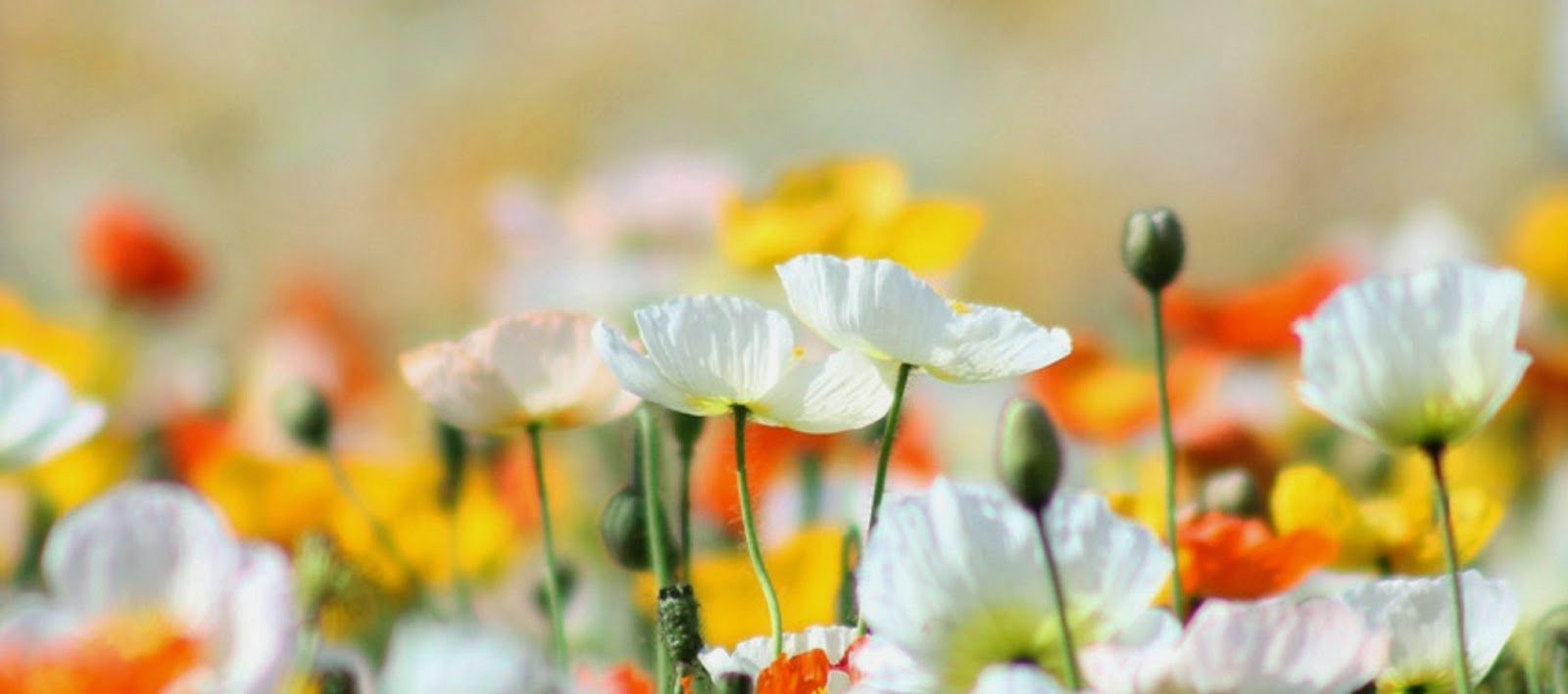 Nature Colors For Facebook Nature Flower Facebook Cover