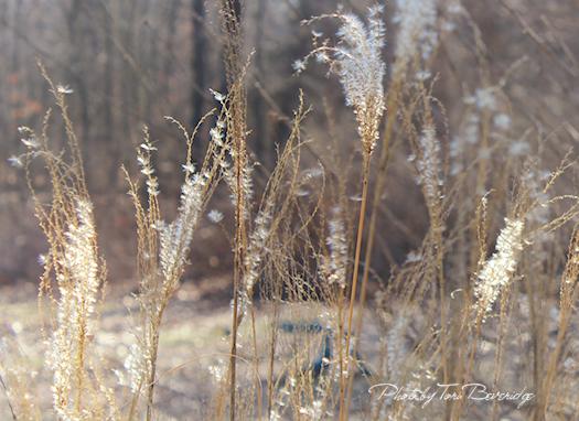 Winter Grass Photo by Tori Beveridge