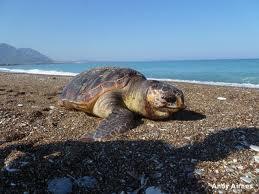 Καθαρισμός παραλίας Καλονερού από τον 'Αρχελών'