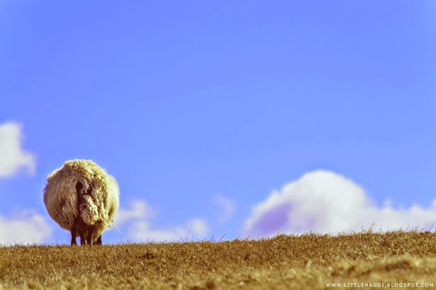 Fotografia oveja en Cramond, Edimburgo