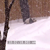 An Epic Snowstorm Just Hit. What This Panda Was Caught on Camera Doing is Freaking ADORABLE!