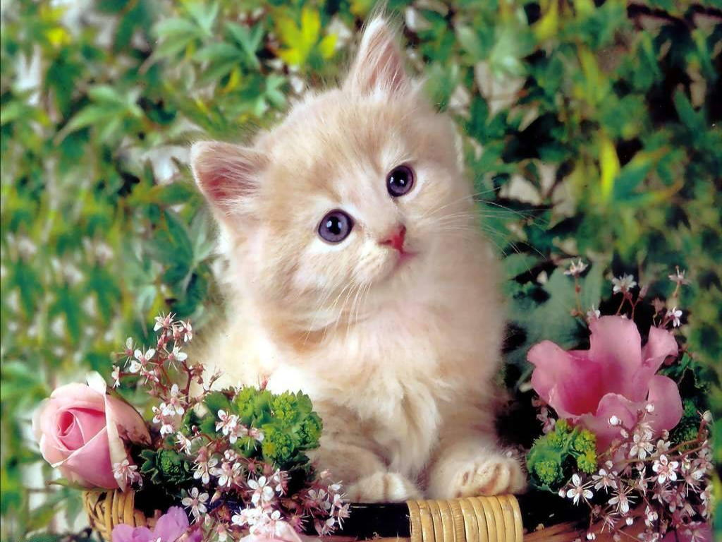 http://1.bp.blogspot.com/-VgNZhnTL8vE/UDcWaIKFWAI/AAAAAAAACwQ/7L17dKz_iJ0/s1600/Cute-Cat-Wallpaper+%281%29.jpg