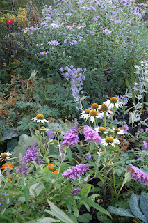 September Plants for Bees and Butterflies