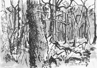 Forest Ink Drawing