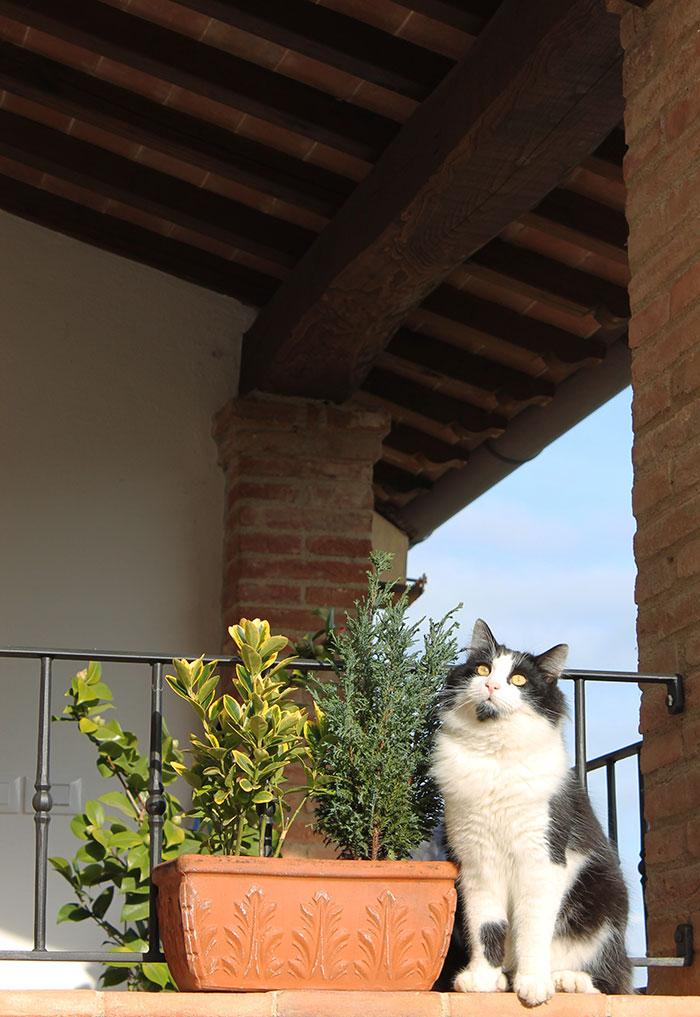 gatto panicale buongiorno