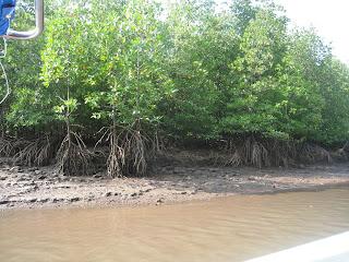 Tropics Boat Tour Groupon