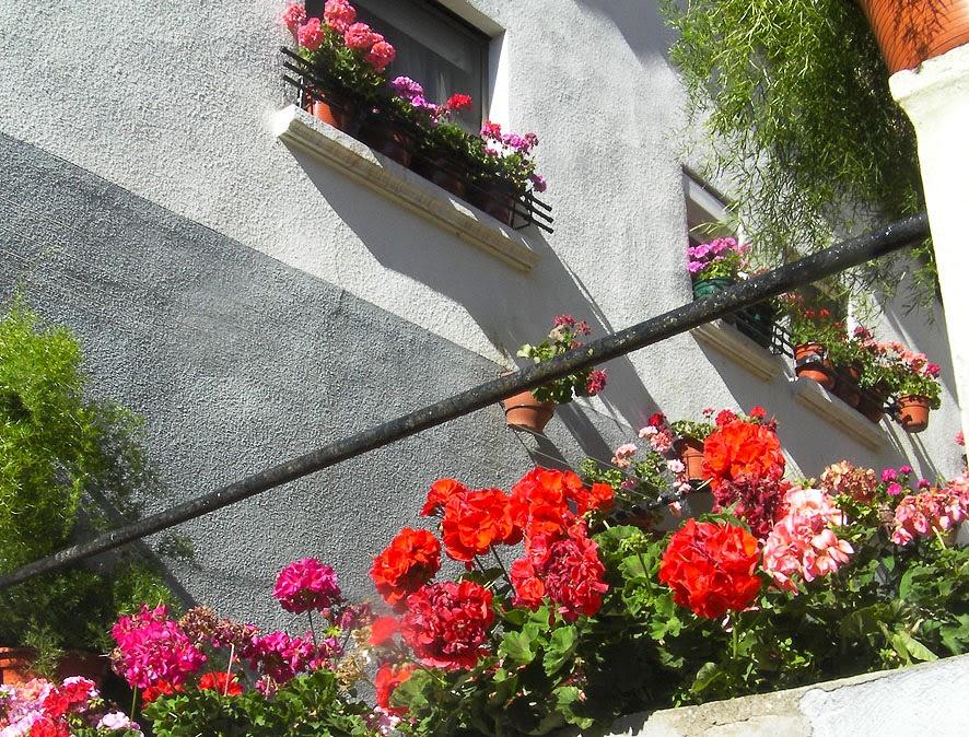 Que plantar en octubre for Jardin que planter en janvier