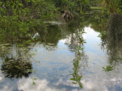Old Bayou Metairie:  City Park, NOLA