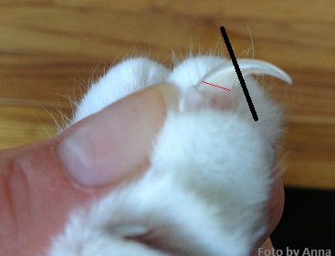 klippa kattungens klor