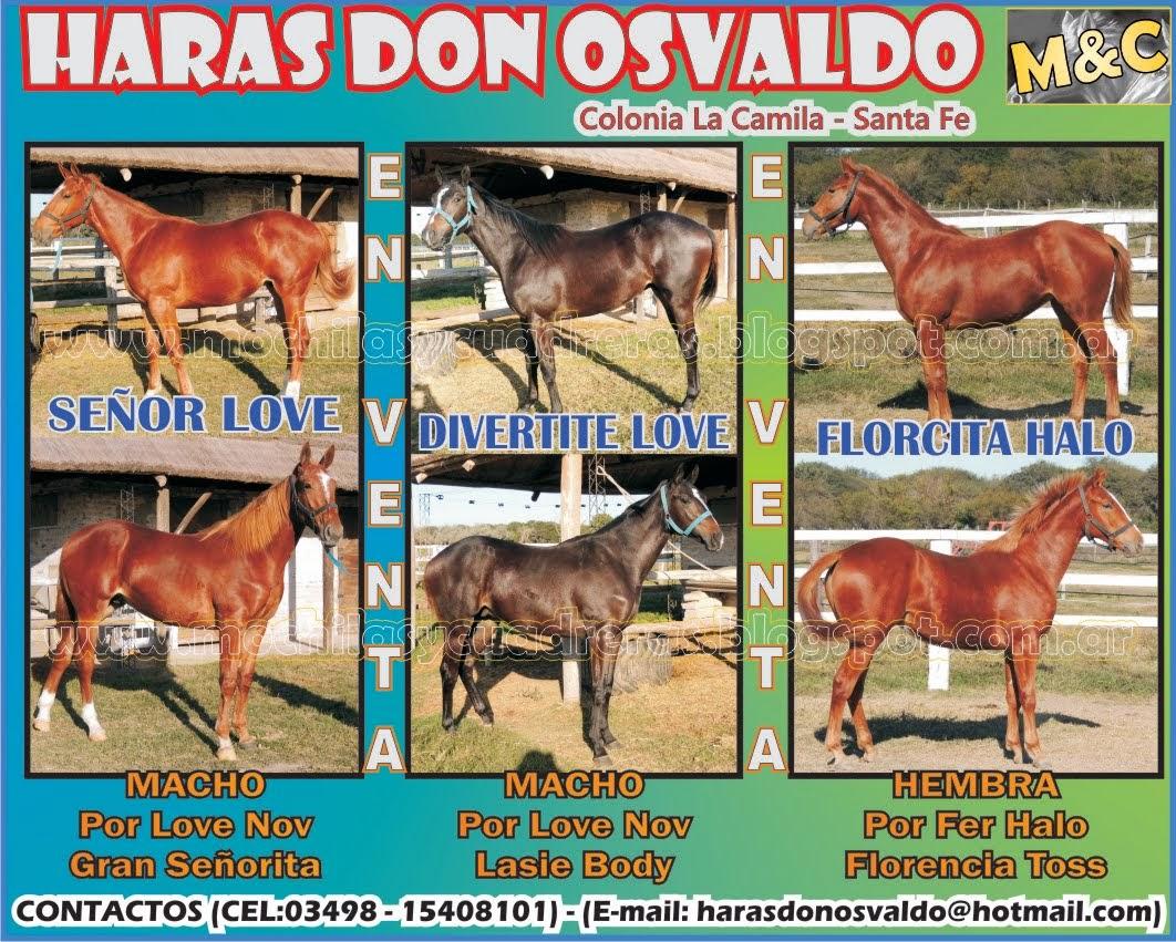 HARAS DON OSVALDO - POTRILLOS - 01/06/14