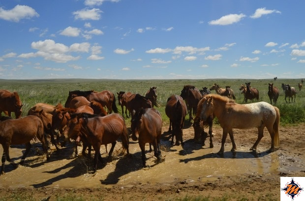 In viaggio verso l'Erdene Ukhaa Tourist Camp