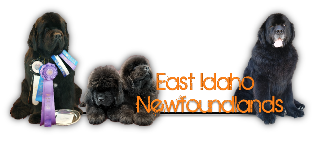 East Idaho Newfoundlands