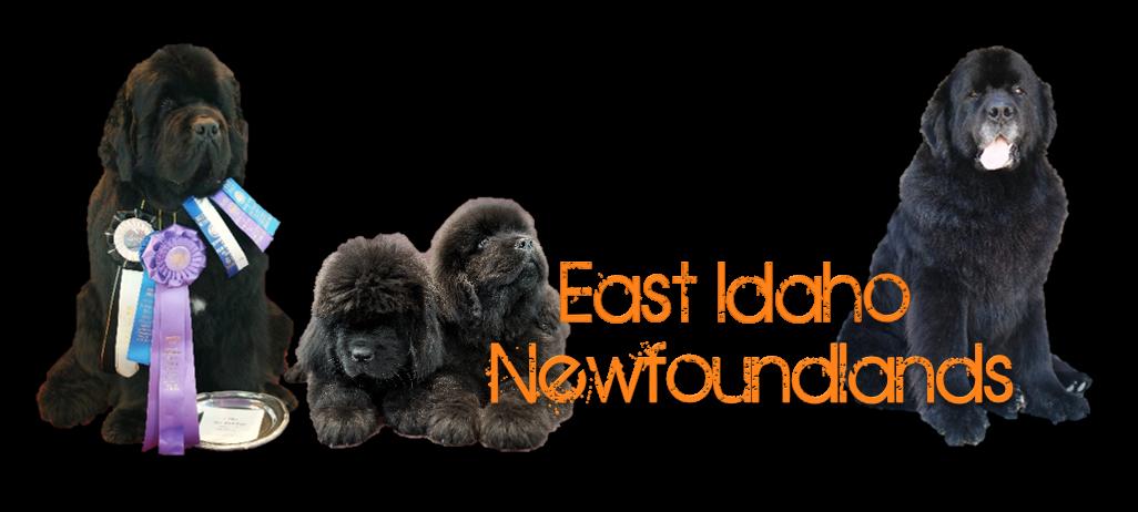 East Idaho Newfoundlands