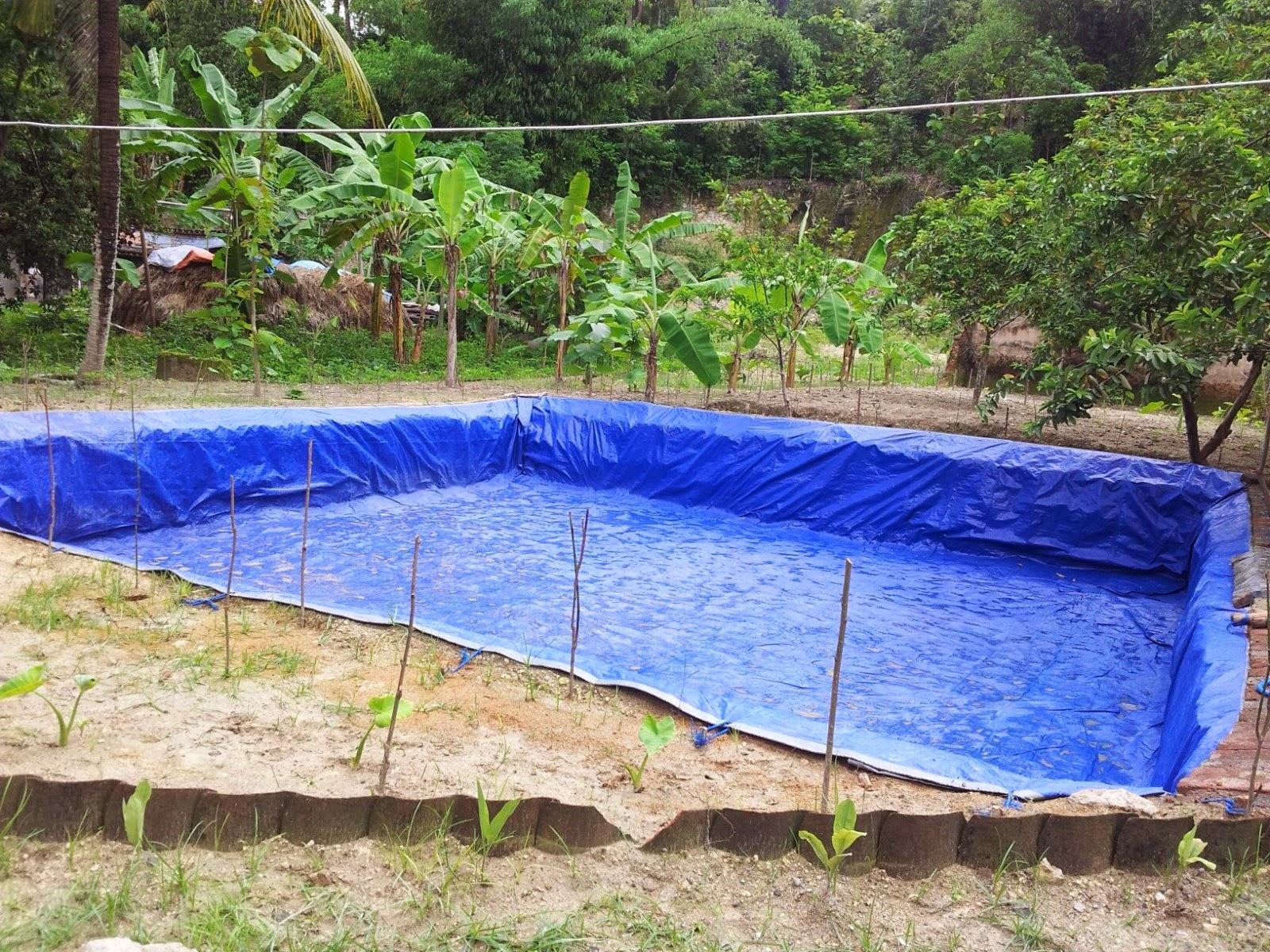 Budidaya Ikan Nila Dengan Kolam Terpal