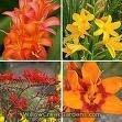 Terapias florales & psicoastrología